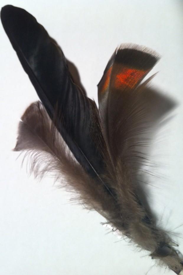 Crow Wild Turkey